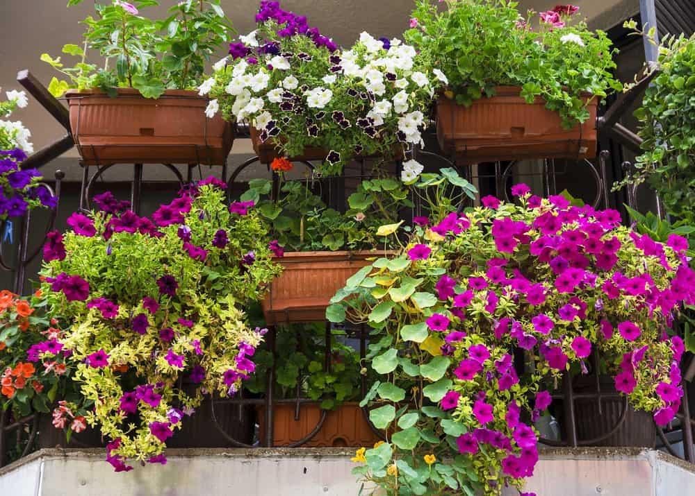 daily gardening