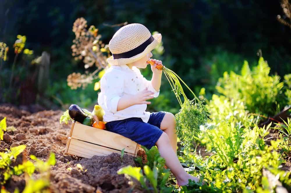 Vegetable Garden Mistakes To Avoid