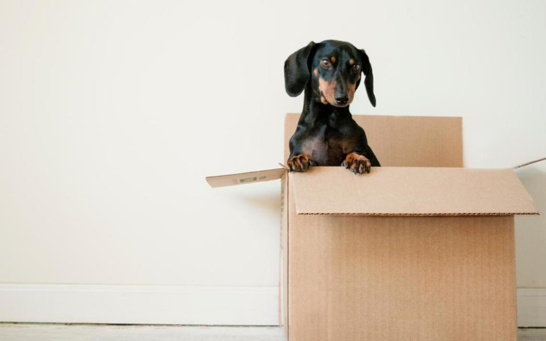 Easy Moving House Tips for A Fearless Shift