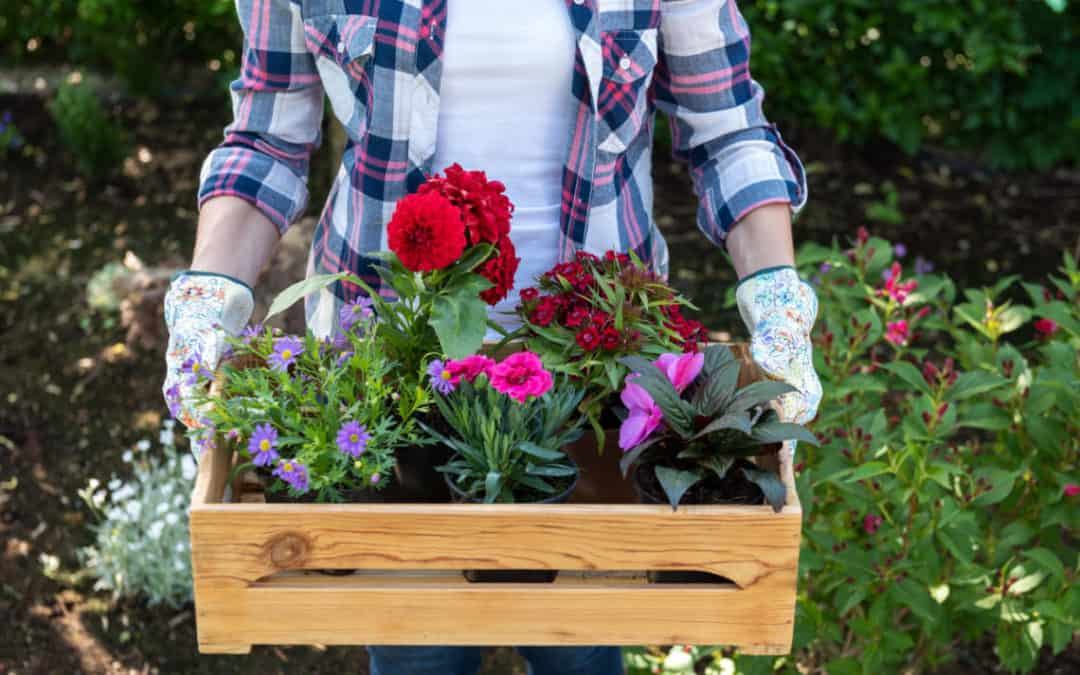 What are the Easiest Plants to Grow in Your Garden?
