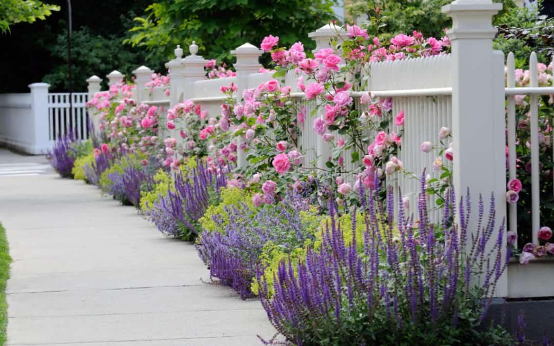 Rundown Garden Up-Grade and Security Plan