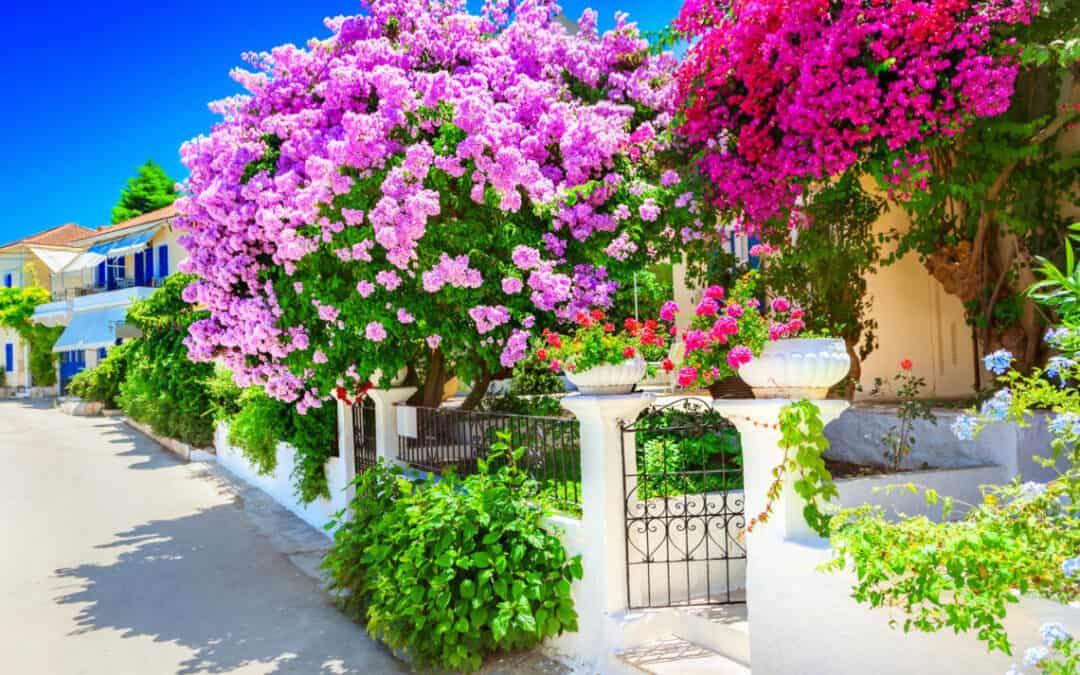 Beautiful Garden Tidy Up You can Do Now